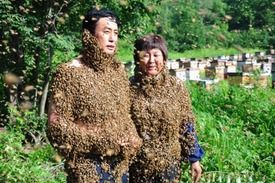 Couple covered by over 10,000 bees