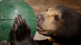 "Historic vote to end ""bear farming"""