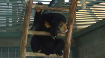 Bear sanctuary saved from eviction