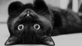 Black Cat Appreciation Day: the perfect time to adopt