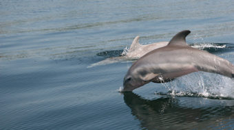 Blood Dolphins shines light on dolphin's plight