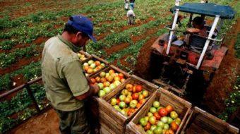 Cuba's cooperative farms break new ground in production