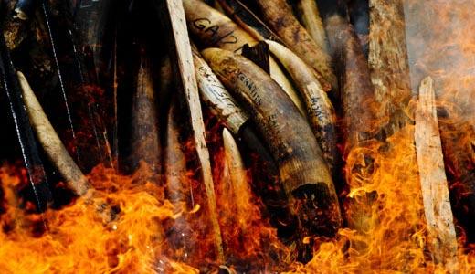 U.S. to pursue aggressive crackdown on wildlife trafficking