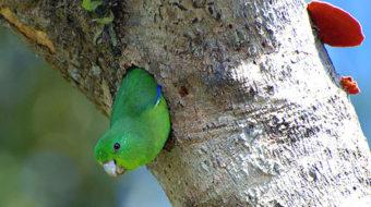 Eisenberg, Humane Society on mistreatment of exotic birds