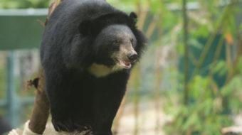 Bear rescue center faces risk of profit-driven shutdown