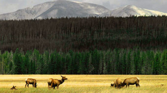 National Park Service anniversary is bittersweet in face of growing perils