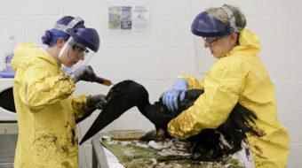 Toxic shock: California's nightmare oil spill