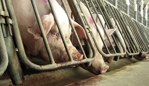 """Animal rights activists fighting """"Ag-Gag"""" laws"""