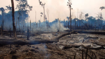 Decline of Earth's plant life threatens human life