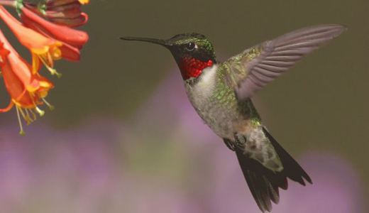 Birds feeling the sting of bee-killing pesticides