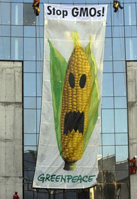 """Agent Orange corn"" and herbicide spark concern"