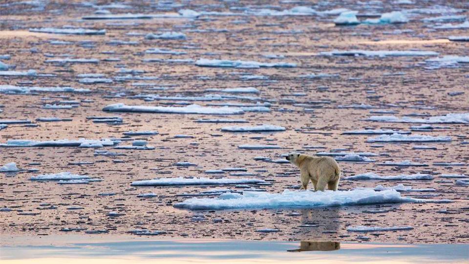 Arctic temperatures soar as sea ice shrinks