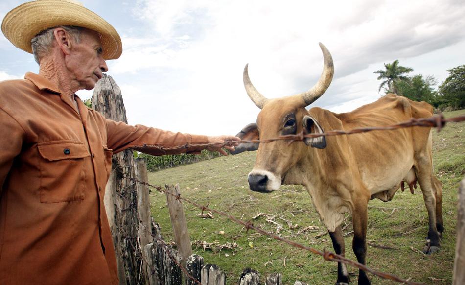 Saving socialism: Cuba renews land reform to bolster food production