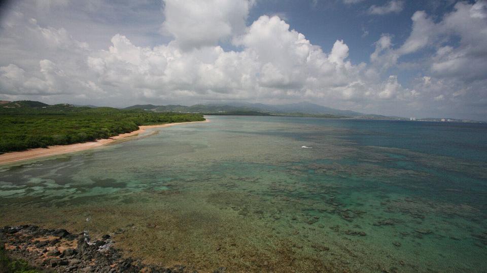 Biodiversidad a la Venta en Puerto Rico