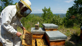 France: Beekeepers struggle to survive as hives continue to die off