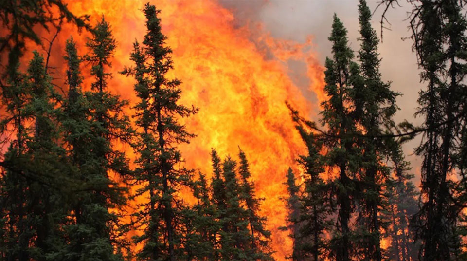 Disastrous Alaskan wildfires could permanently alter forest composition