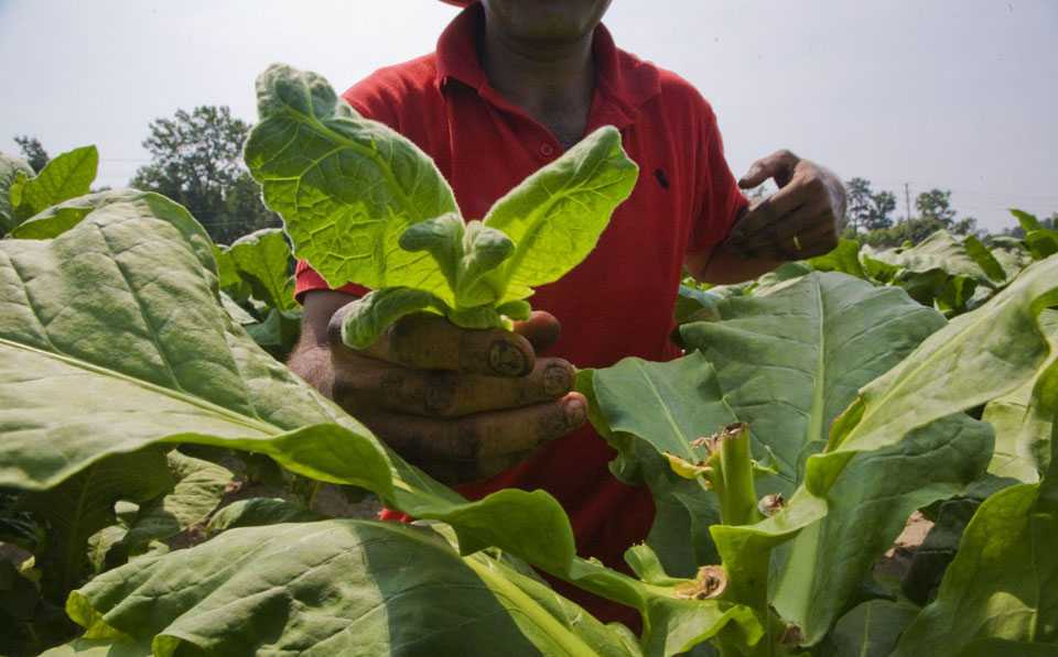Another day, another Trump attack – this time on farm workers