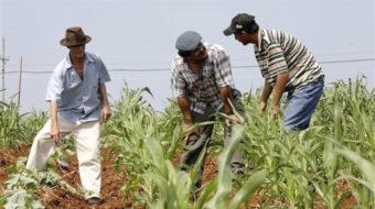 Cuba: Programa de la Agricultura Urbana, Suburbana y Familiar