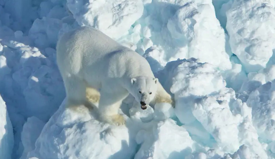 Bank refusal and lawsuit may trump Trump drilling in wildlife refuge