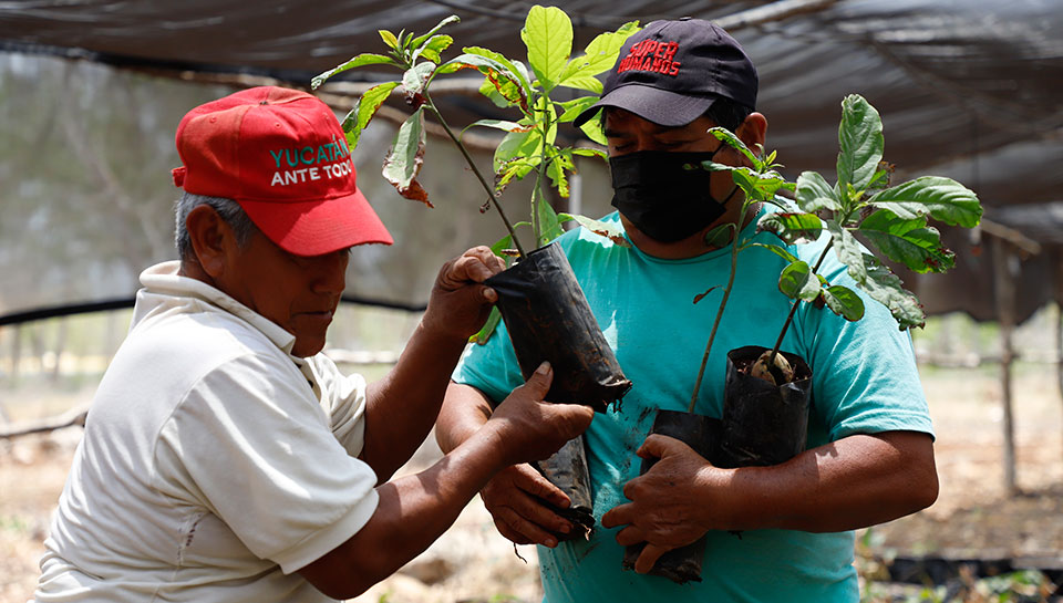 Mexico's president proposes green jobs and humane labor migration