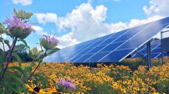 Will big solar installations help foster biodiversity?